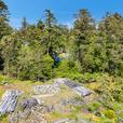 Building Lot for Sale - 2789 Arbutus Rd