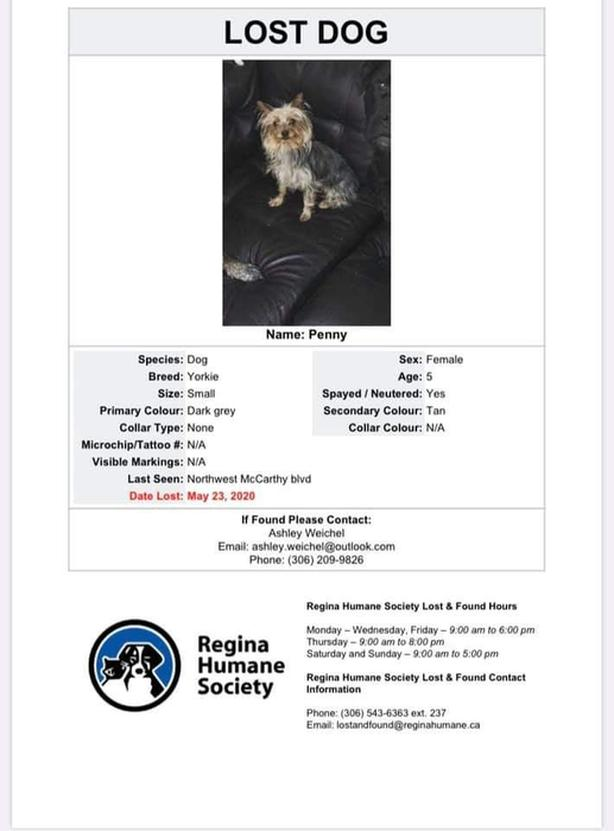 FREE: LOST: FEMALE YORKIE DOG