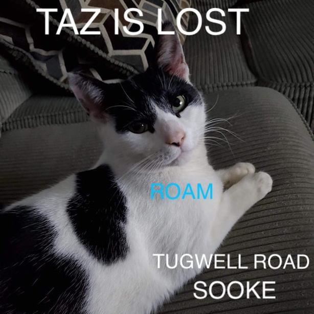 ROAM ALERT ~ LOST CAT 'TAZ'