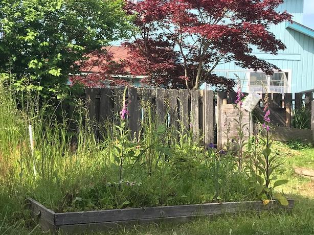 WANTED: someone to clean out 4 raised flowerbeds