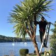 Tree and Landscape - Ascent Yard Care