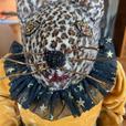 Miss Kitty the Leopard Cat