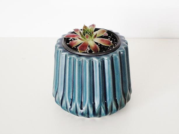 Hens and Chicks Succulent Plant with Glazed Ceramic Pot