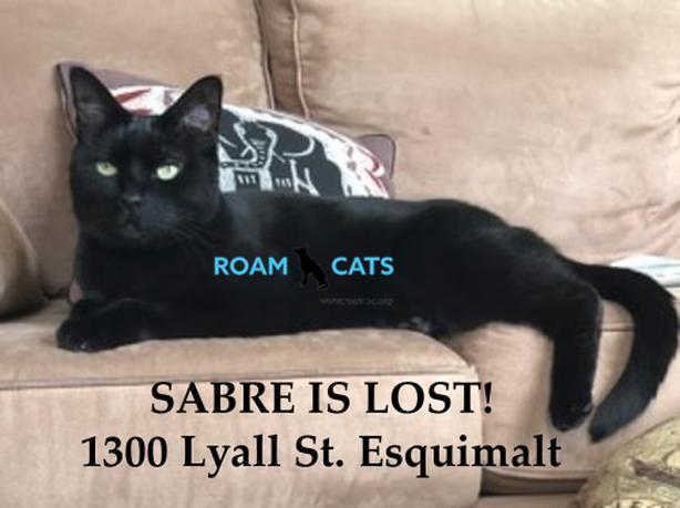 ROAM ALERT - Lost Cat:  ‼️INDOOR CAT: SABRE