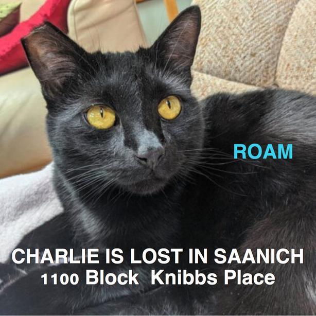 ROAM ALERT. Charlie is lost in Saanich