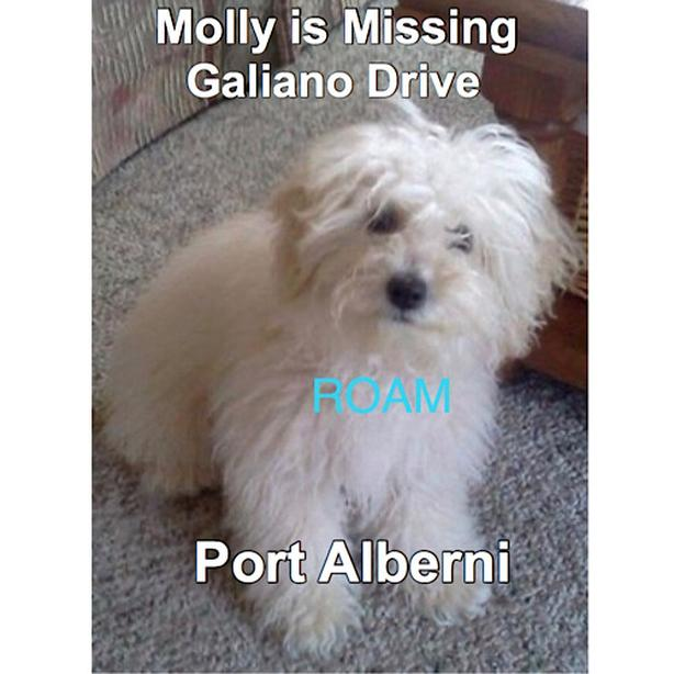 ROAM ALERT: LOST DOG MOLLY
