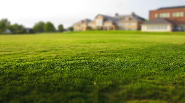 Let's mow your lawn $30 starting price
