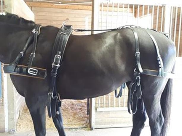 Ideal Leather Single Horse Harness for sale