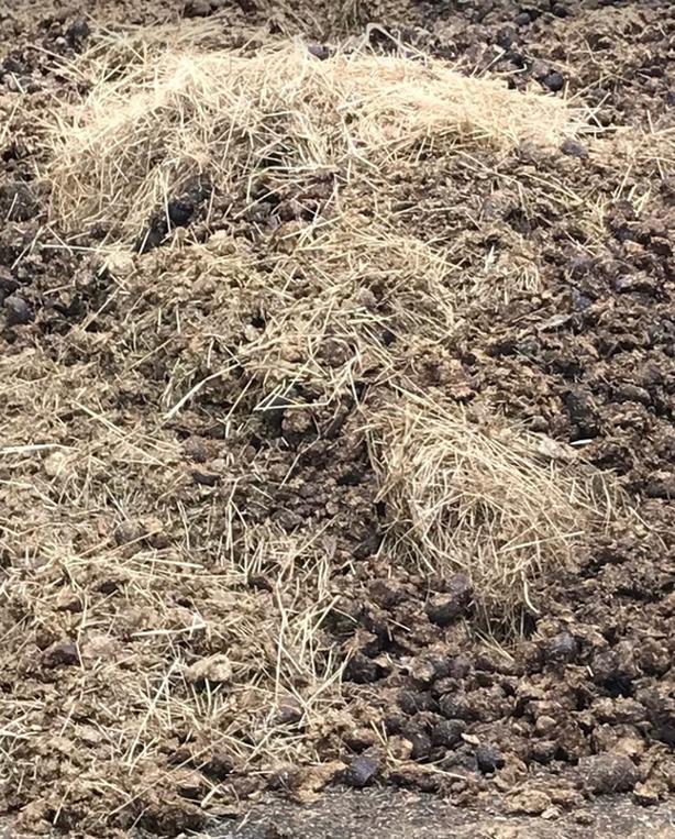 FREE: horse manure