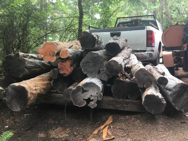Pacific Yew logs