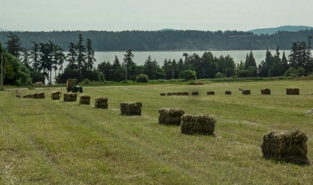 Local Hay for Sale