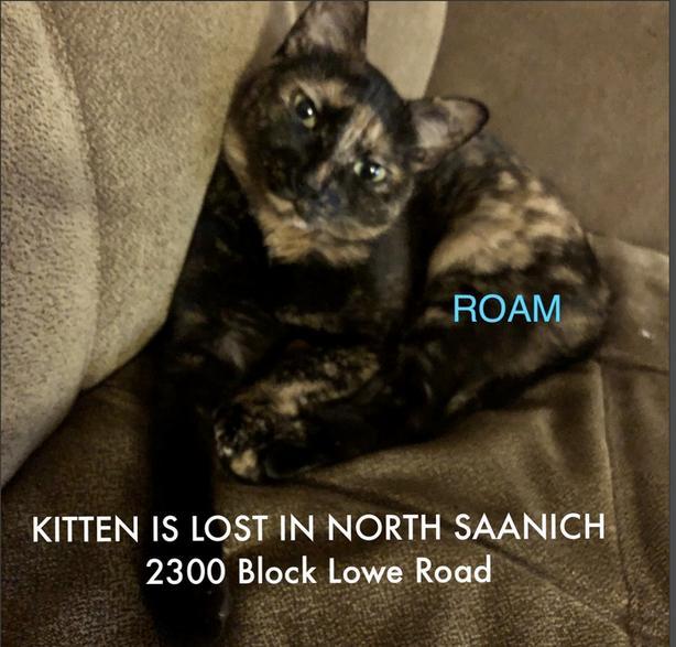 ROAM ALERT ~ LOST CAT 'KITTEN'