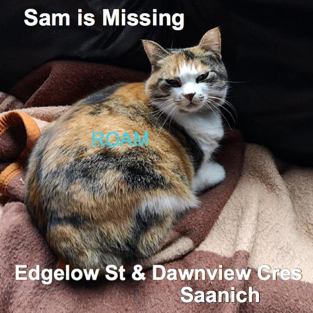 ROAM ALERT ~ LOST CAT 'SAM'  (SAMUS)