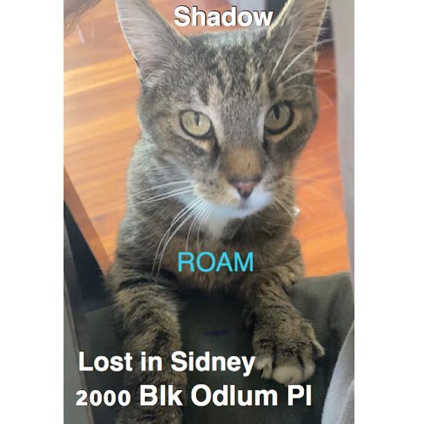 ROAM ALERT: LOST CAT SHADOW