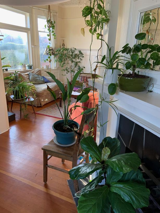 Large Room Available in Community Oriented Home