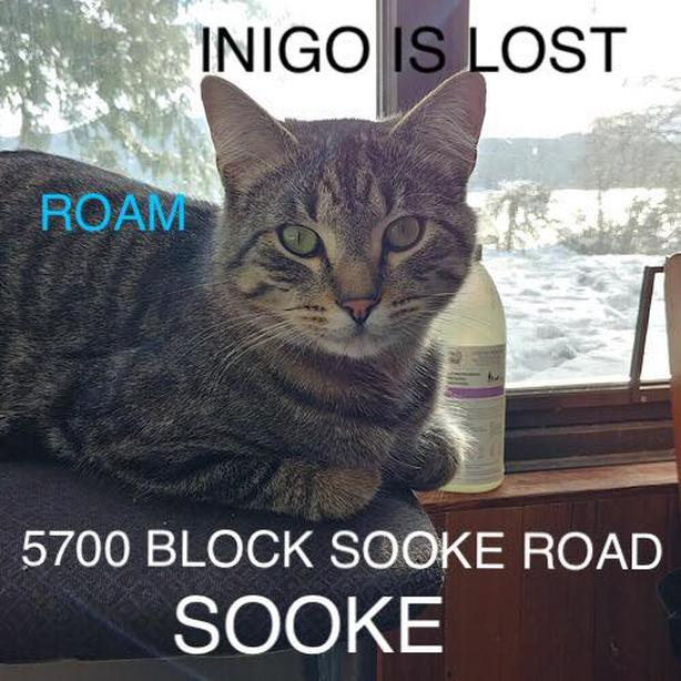 ROAM ALERT ~ LOST CAT 'INIGO'