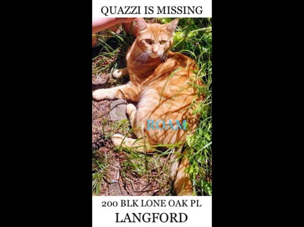 ROAM ALERT ~ LOST CAT 'QUAZZI'