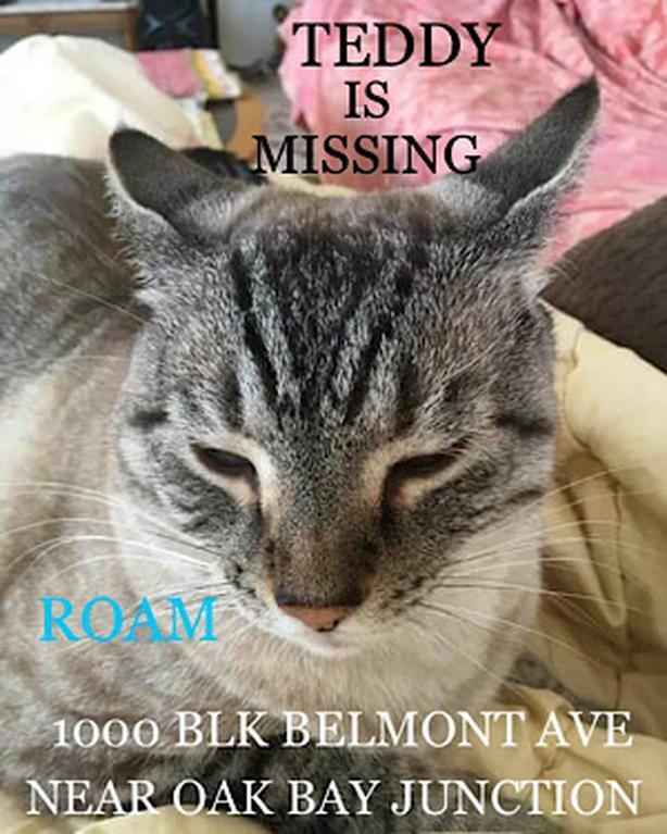 ROAM ALERT ~ LOST CAT 'TEDDY'