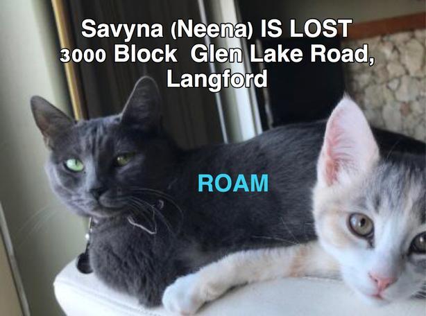 """ROAM ALERT. Lost cat in Langford """"Savyna"""""""