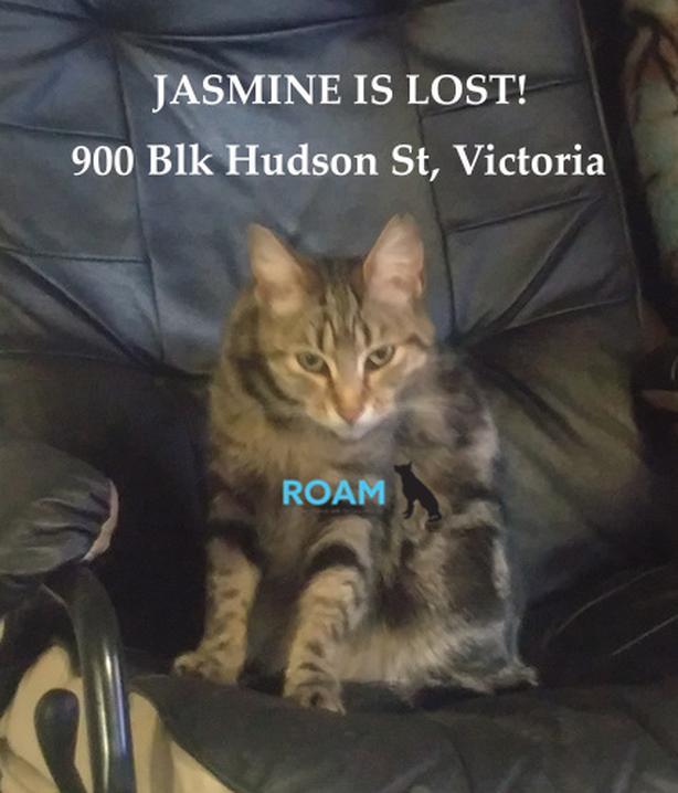 ROAM ALERT ~ LOST CAT 'JASMINE'