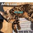 ROAM ALERT ~ LOST CAT 'ARI'