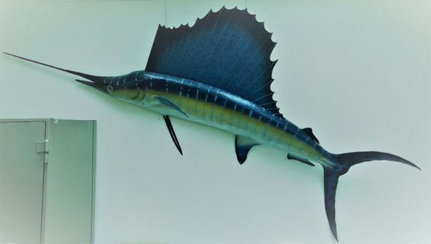 walleye and sailfish mount