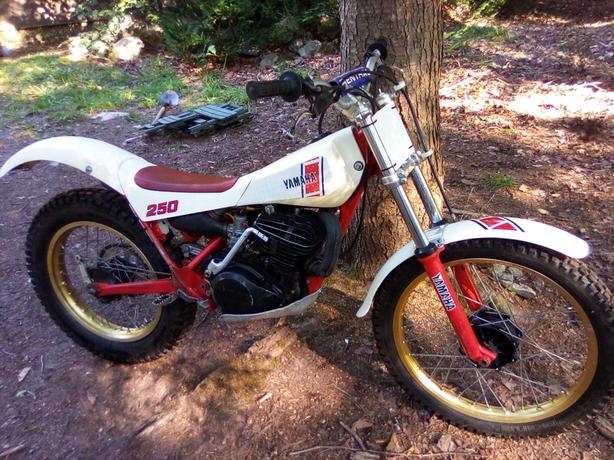 1984 yamaha th 250 mono Sayward