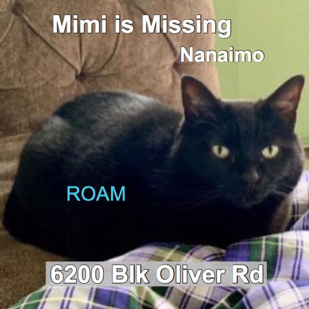 ROAM ALERT: LOST CAT MIMI
