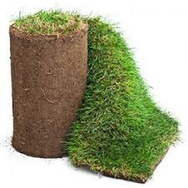 WANTED: Sod