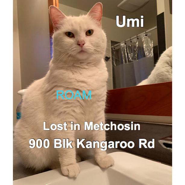 ROAM ALERT ~ LOST CAT 'UMI'