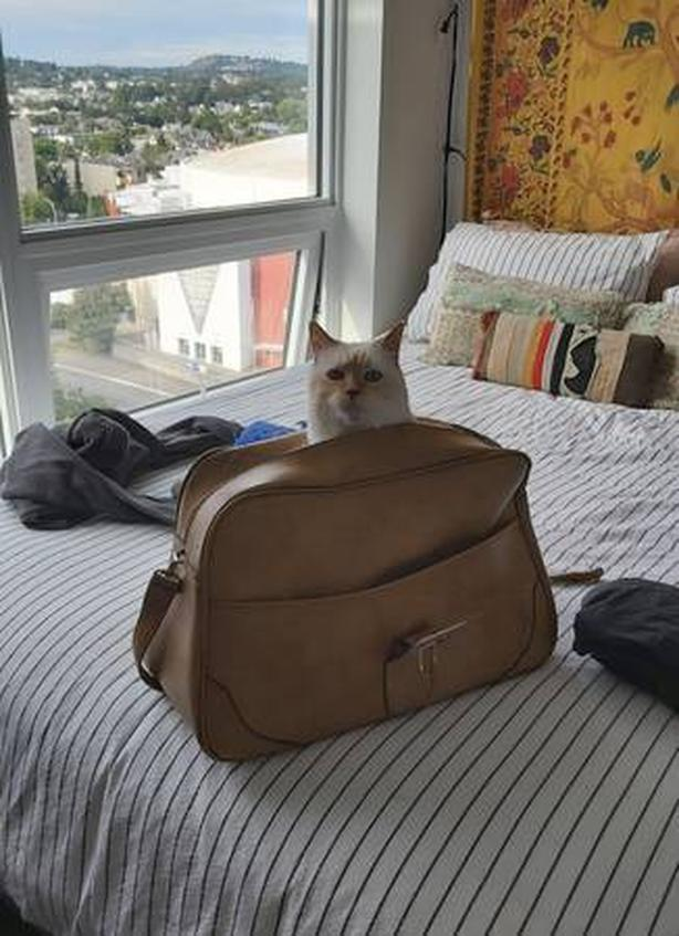 WANTED: 1 Bedroom for Person and Well Behaved Cat