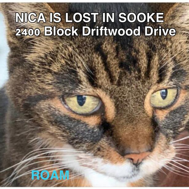 ROAM ALERT ~ LOST CAT 'NICA'