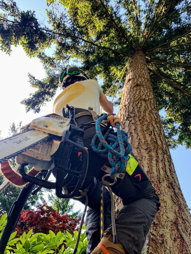 Arborist / Tree Work