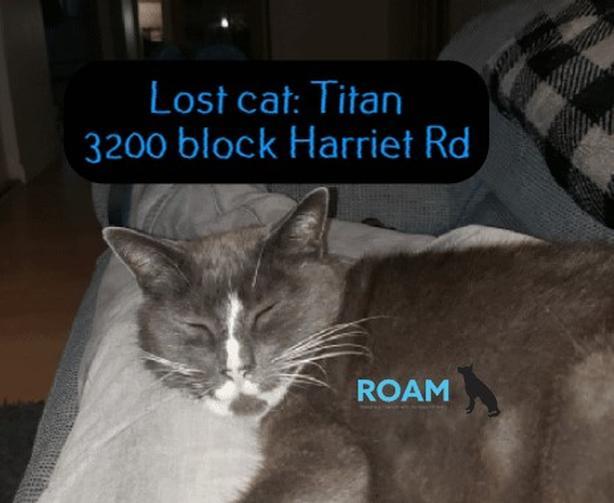 ROAM ALERT ~ LOST CAT 'TITAN'