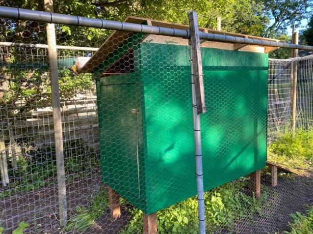 Chicken coop, two black cochin pullets (7mos), and woodchips