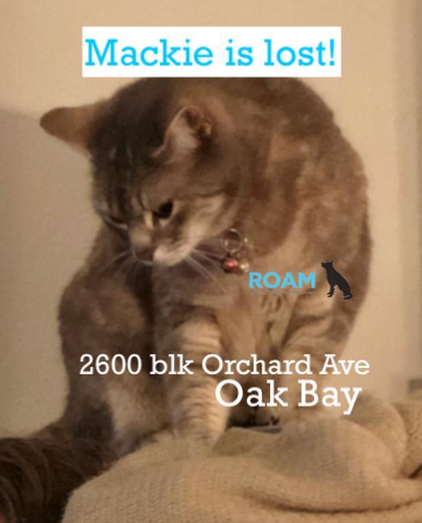 ROAM ALERT ~ LOST CAT 'MACKIE'