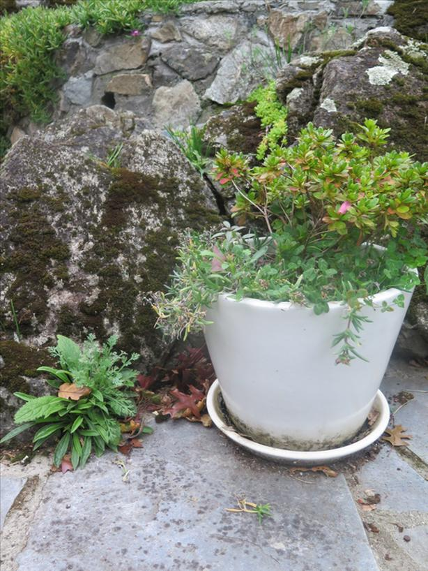 planter and plant