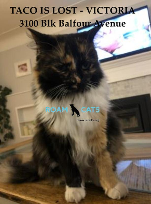 ROAM ALERT ~ LOST CAT 'TACO'