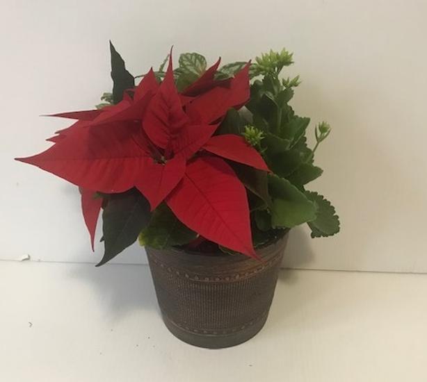 6.5in Mixed Christmas Planter @ Hilltop Gardens