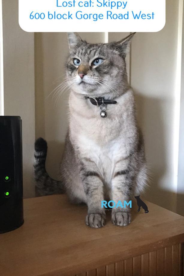 ROAM ALERT ~ LOST CAT 'SKIPPY'