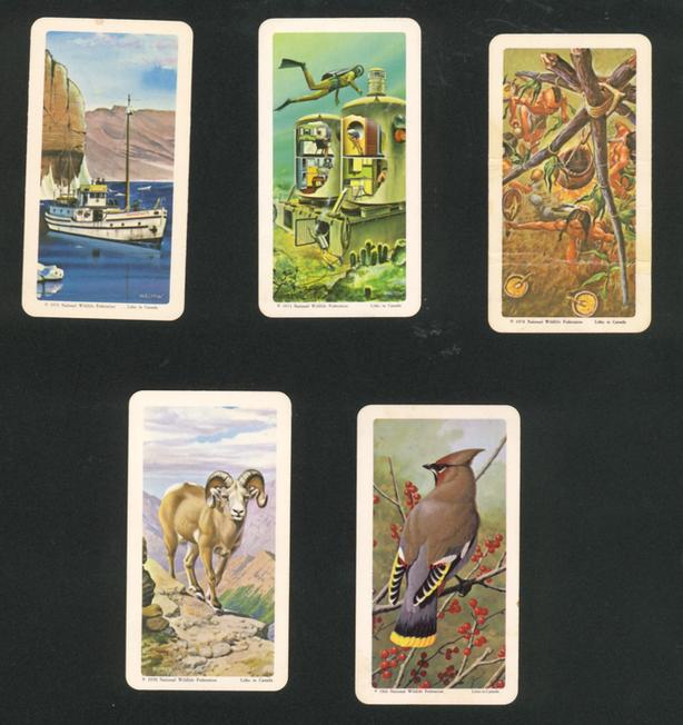 Large Lot Brooke Bond Red Rose Cards Animals Exotic Birds Dinosaurs Space