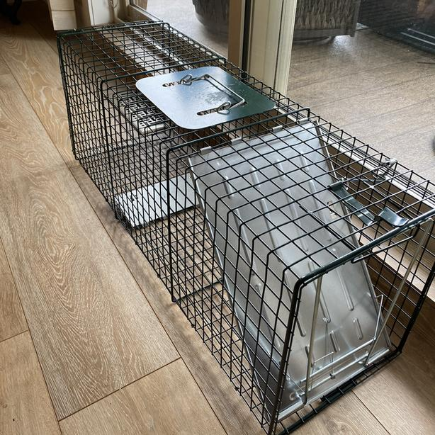 Live animal trap - large