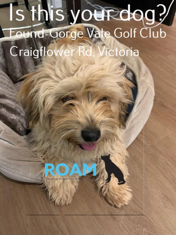 Found Dog: Gorge Vale Golf Club, Vic BC