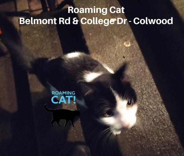 ROAMING ALERT - CAT in Colwood