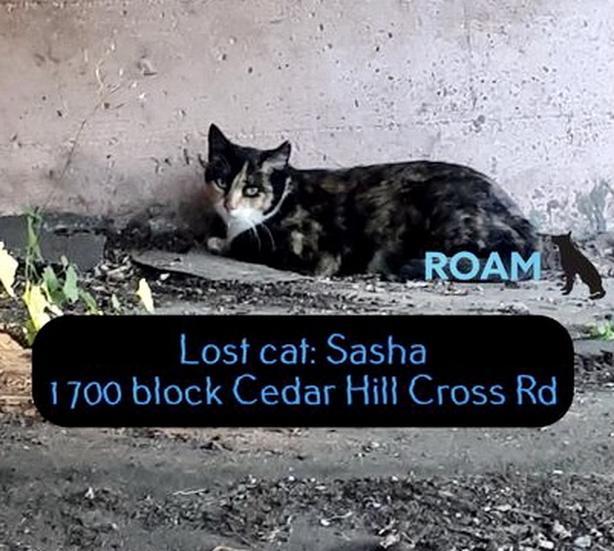 ROAM ALERT ~ LOST CAT 'SASHA'