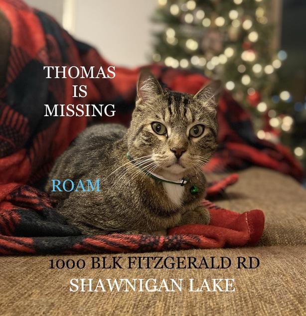 ROAM ALERT ~ LOST CAT 'THOMAS'