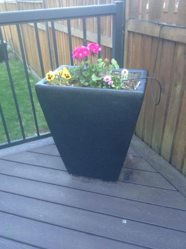Two Cement Planters with some plants/bulbs $85 each