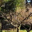 Fruit tree pruning & winter seasonal services
