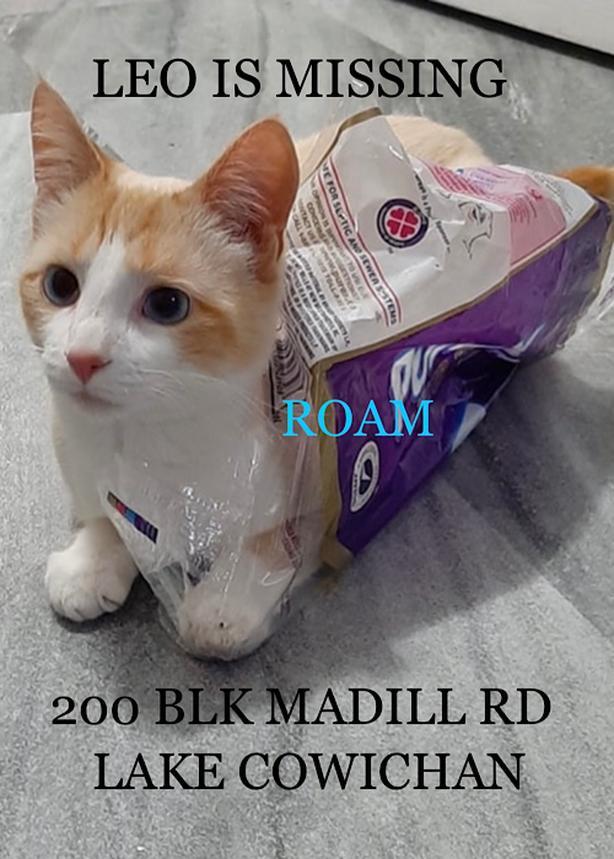 ROAM ALERT ~ LOST CAT 'LEO'
