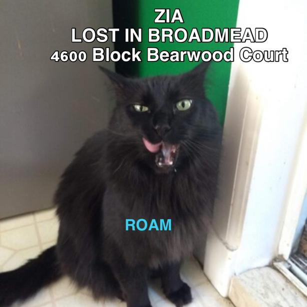 "ROAM ALERT. Lost cat in Saanich ""Zia"""